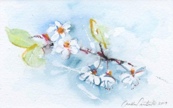 kirsikan kukkia